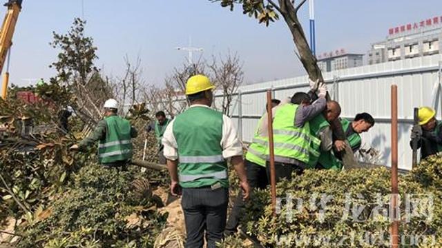 迎接省十三运会文昌大道绿化工程已完成近半