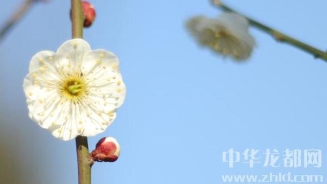 周口:花之白