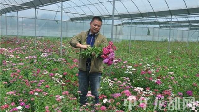 大棚鲜花 助农脱贫