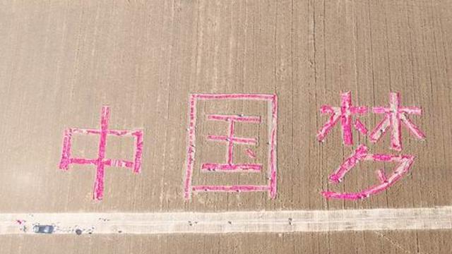"""周口农民麦田里割出""""中国梦"""""""