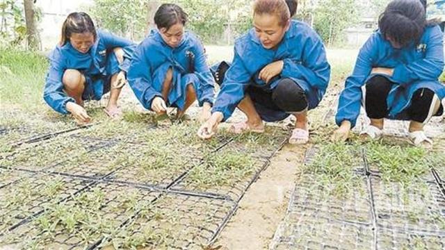 鹿邑县成立绿枸中药材种植专业合作社