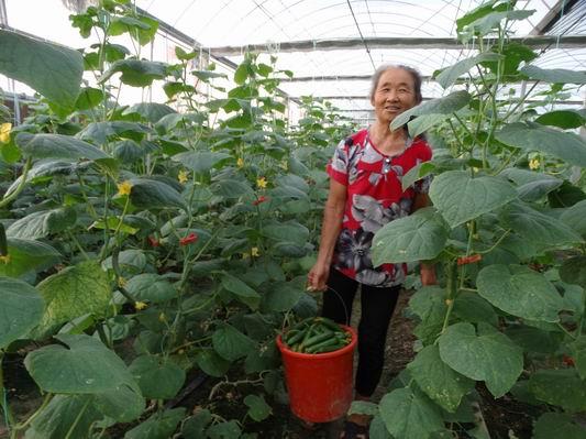 周口:特色农业助民增收