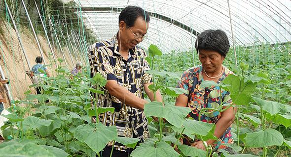 沈丘:瓜果蔬菜产业促农增收致富