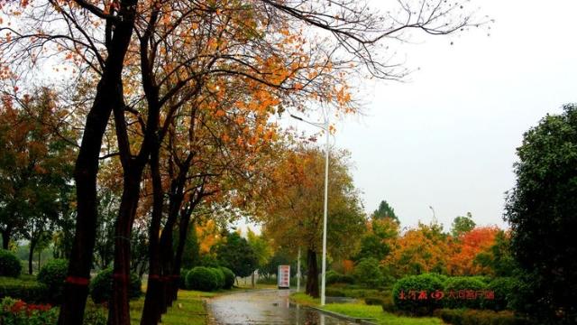 诗情画意!秋冬之交一场雨 别样周口落叶美