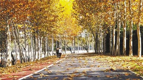 一径秋叶满园幽
