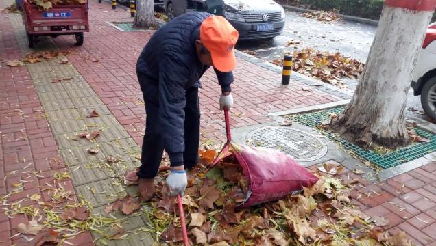 风急雨骤落叶多 周口环卫工人清扫忙