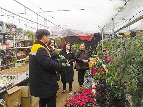春节临近 周口花卉市场日渐火爆