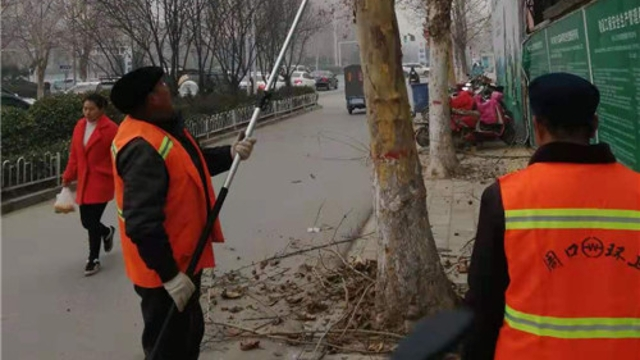 清理行道树枯枝 以免坠落伤人