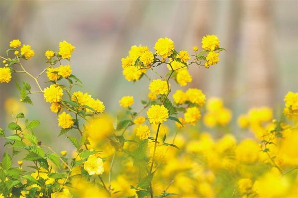 春来到 花儿俏 风筝飞 孩儿笑