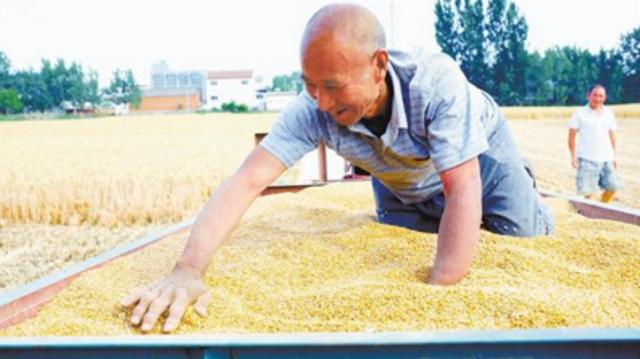 西华百万亩小麦开镰收割