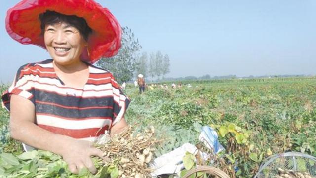 发展订单农业 带动农民致富