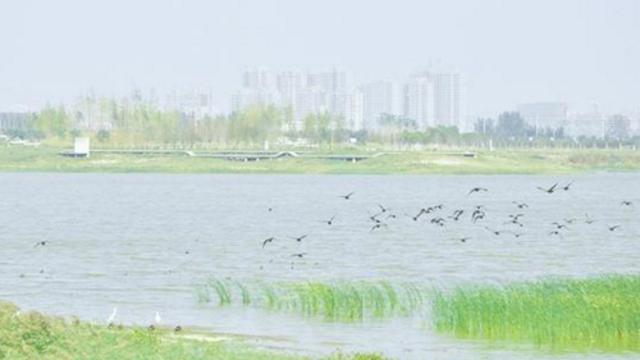 水草丰美 候鸟逗留