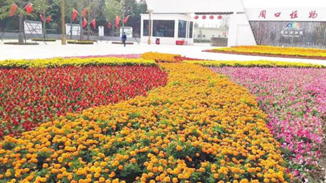 花团锦簇迎国庆