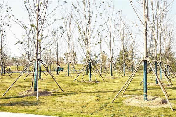 周口市冬季植树活动在商水县森林公园举行