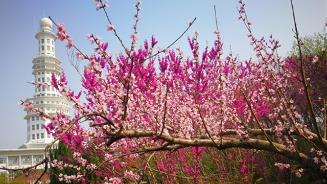 周口公园花开正盛