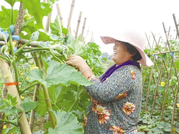 发展特色农业 助力乡村振兴
