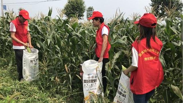 国网周口供电公司:驻村干部带货助增收
