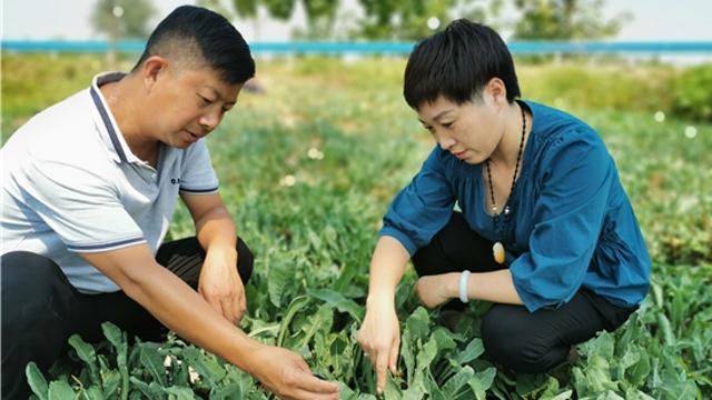 沈丘:发展药材种植促增收