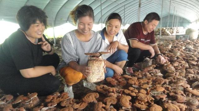 小蘑菇助脱贫