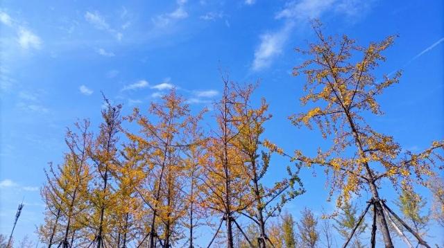 多彩的秋天,缤纷的秋叶