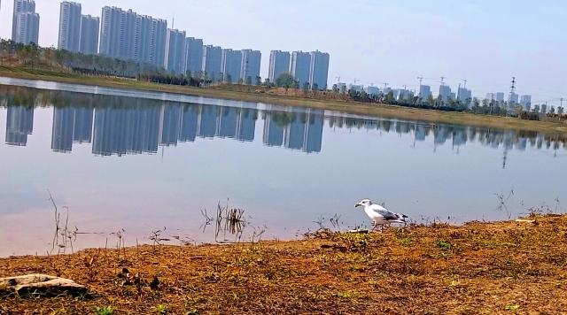 打造水生态城市,让周口更宜居