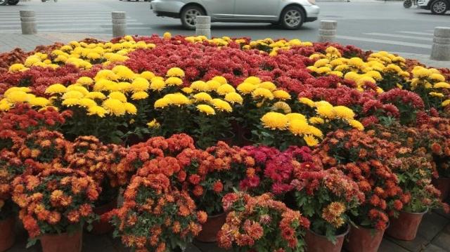 鲜花扮靓十字路口
