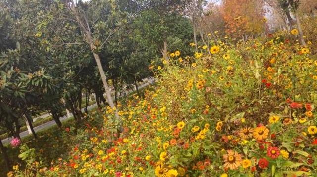 周口市区:雨后雏菊分外鲜