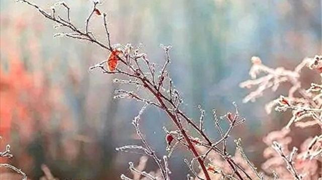 冬日霜花分外美