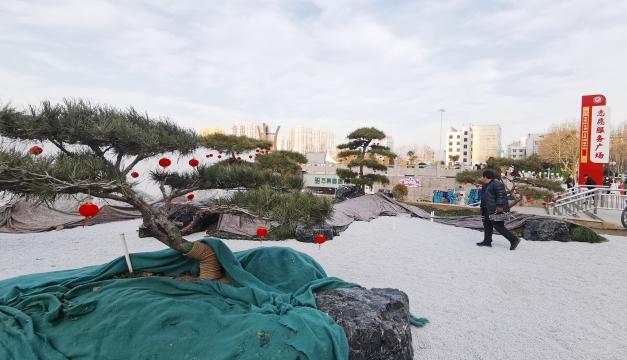 周口五一文化广场绿化提升改造芳容初现