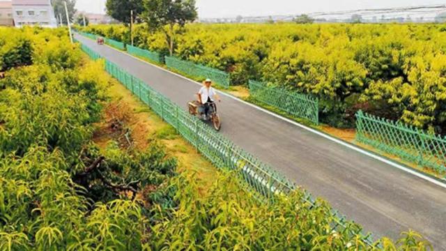 周口:有一个省级绿化模范乡镇叫张庄镇