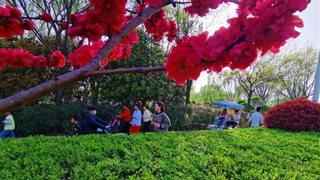 清明节市民踏青  享受户外春光
