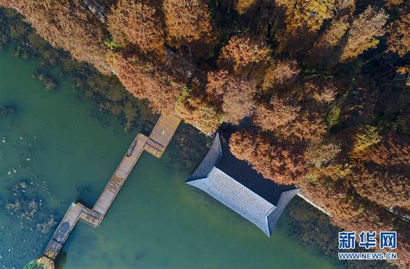 江苏兴化:水上森林冬景美